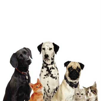 Dog and Cat Pet Care Banner: 533-7