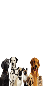 Dog and Cat Pet Care Banner: 533-9