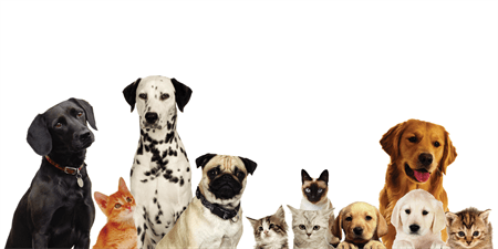 Dog and Cat Pet Care Banner: 533-1